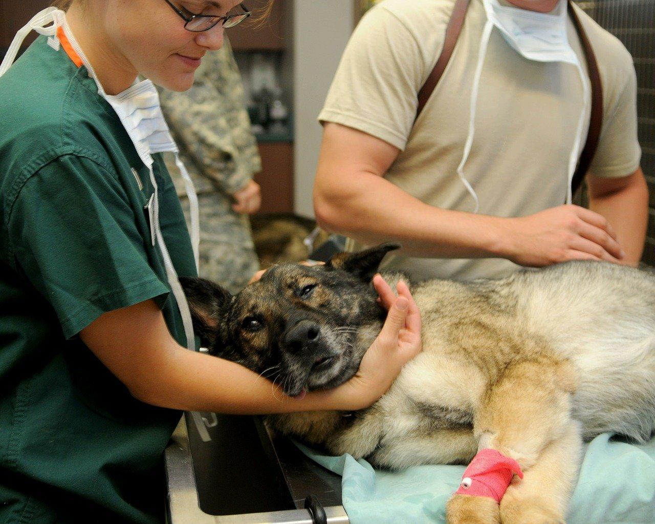 site web vétérinaire