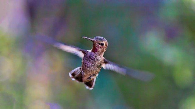 Hummingbird Colibri SEO