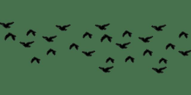 Volé de Pigeon
